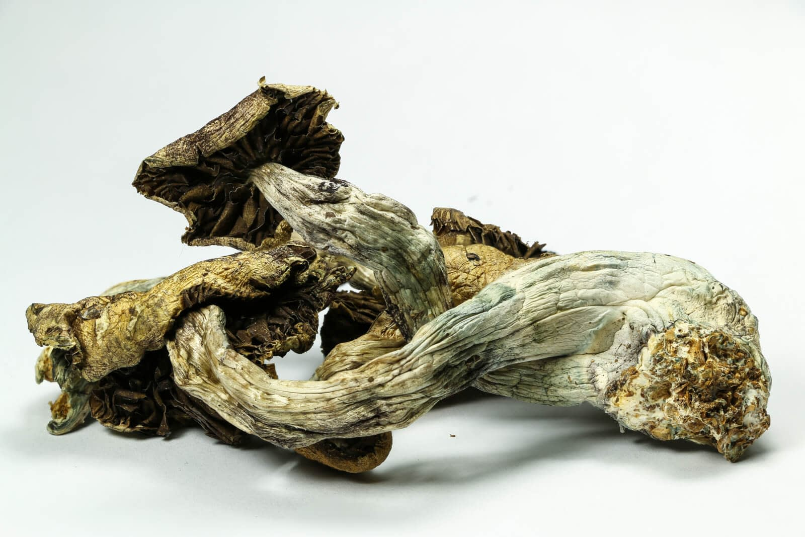 shrooms for health