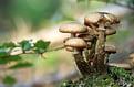 several mushrooms